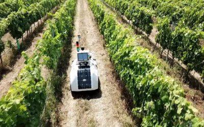 El robot que cuida los viñedos