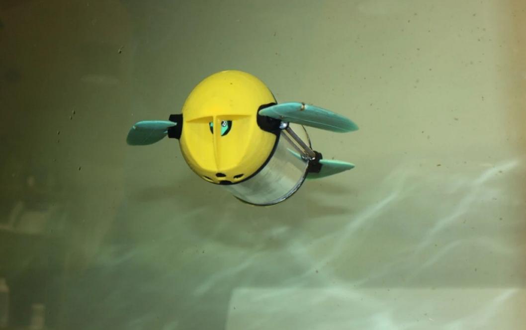 La tortuga marina robótica se muestra prometedora como inspectora de piscifactorías