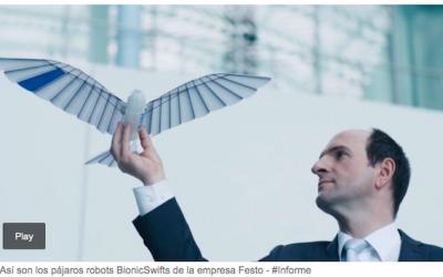 Crearon un pájaro robot que parece real: cómo vuela y para qué sirve