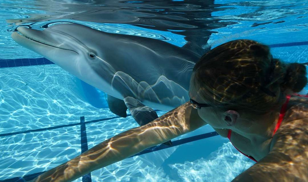 Los Delfines Robots están aquí para Revolucionar los Parques Temáticos Marinos
