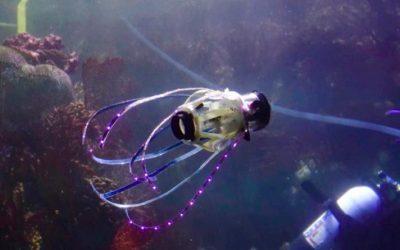 Este robot calamar se mueve igual que los ejemplares de verdad