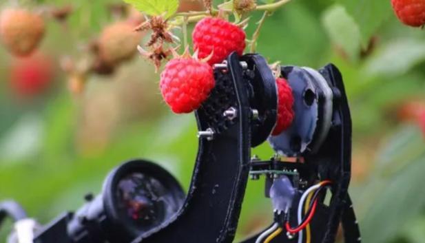 Robocrop: la Máquina que Reemplazará a los Recolectores de Fruta