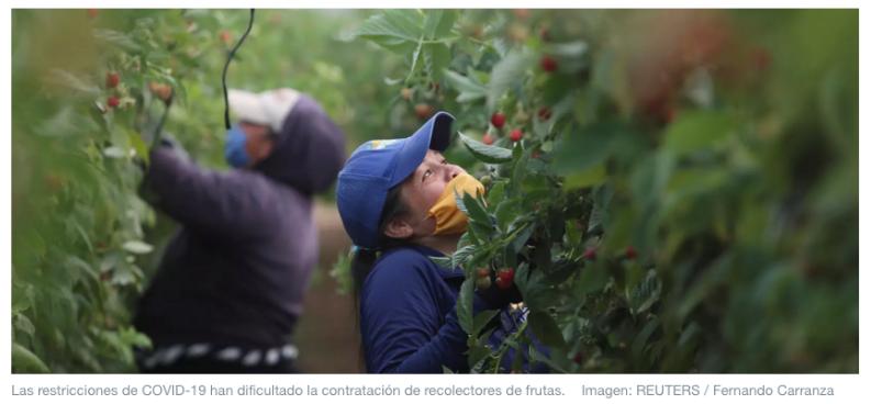 Este robot de IA volador puede recoger fruta, evitando el desperdicio en el proceso