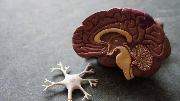 Pequeños Robots son capaces de Introducir Medicamento directamente en Tumores Cerebrales