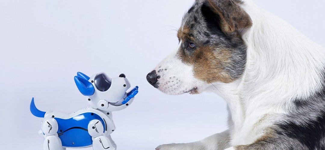 Conozca a Kate Darling del MIT: por qué deberíamos repensar nuestra relación con los robots