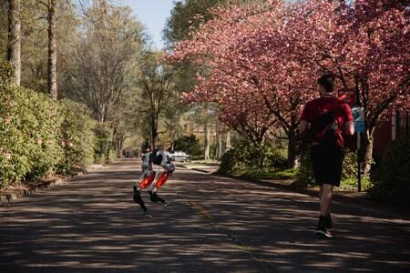 Este robot bípedo es el primero en correr 5 kilómetros: no es más rápido que nosotros, pero sus tiempos son prometedores